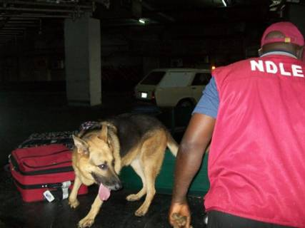 Image result for Germany Donates Six Sniffer Dogs To NDLEA