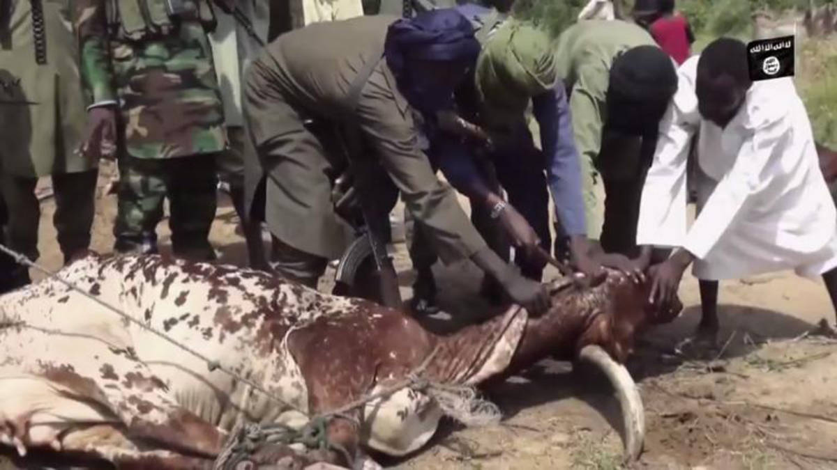 BH Sallah celebration slaughtering a cow