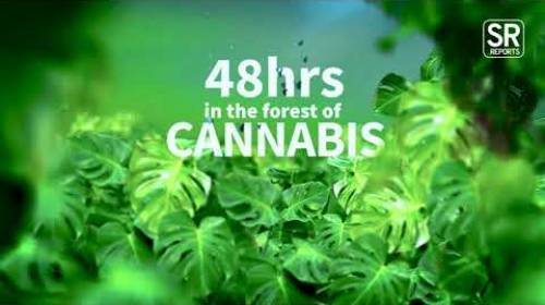 48 Hours In The Forest Of Cannabis